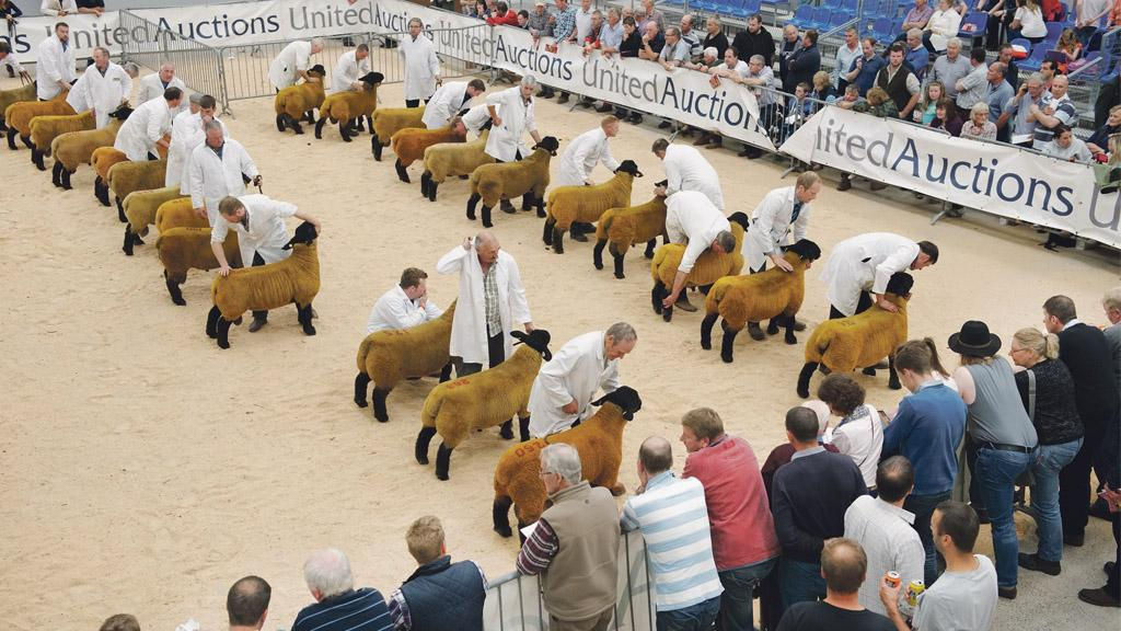 Use your stockjudging skills to be in with a chance of winning a prize worth £250