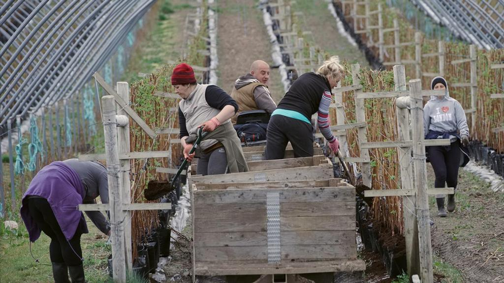 Migrant labour key to meeting growth targets in Scotland