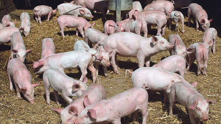 European pork exporters urged to invest in China to 'continue to capitalise on colossal appetite for pork'