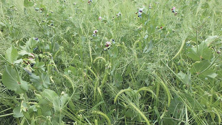 Farmers invited to take part in diverse cropping project