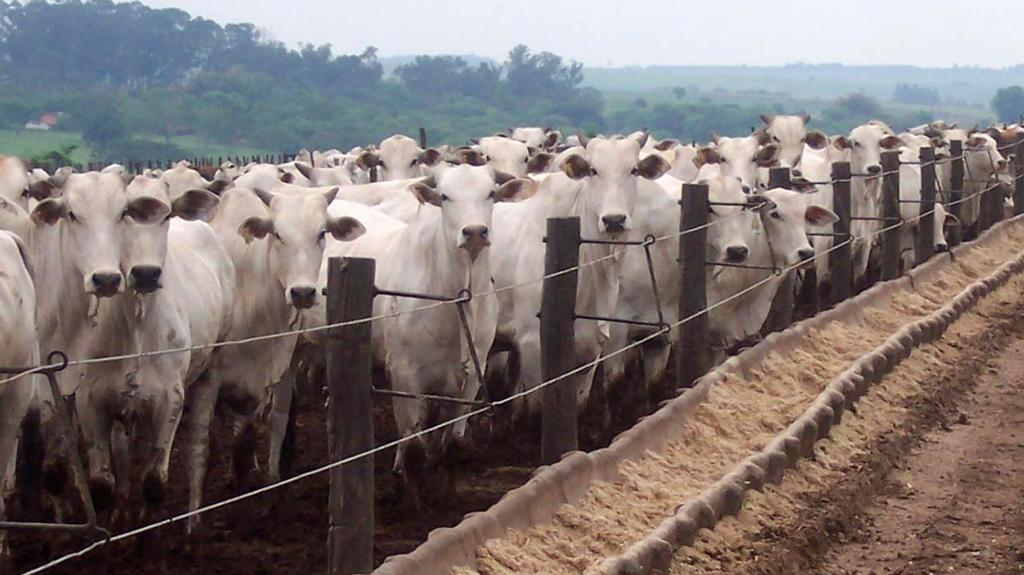 'Ensuring the safety of our nation's food supply is one of our critical missions' - US bans Brazilian beef