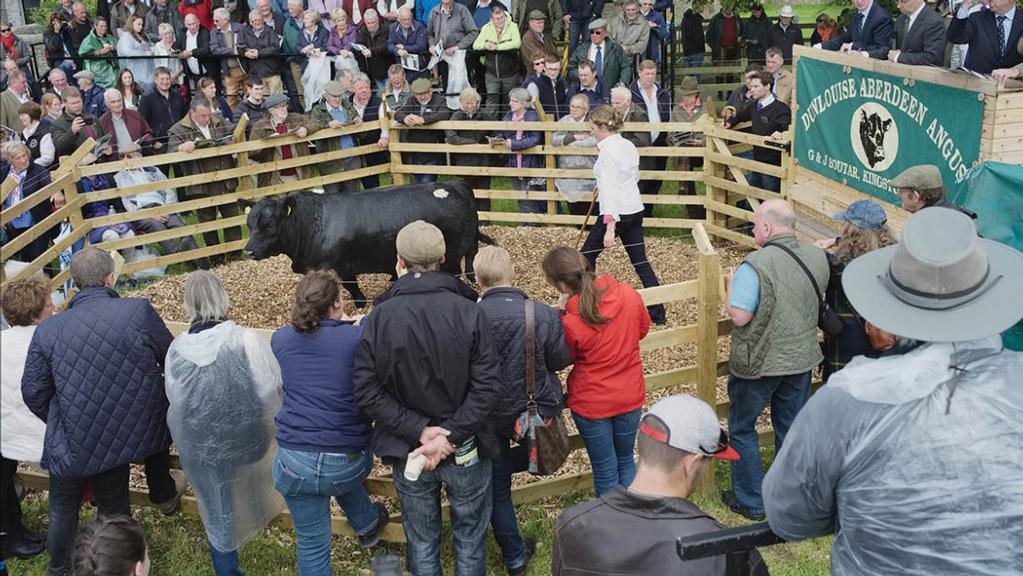 Dunlouise Angus sale attracts international bids