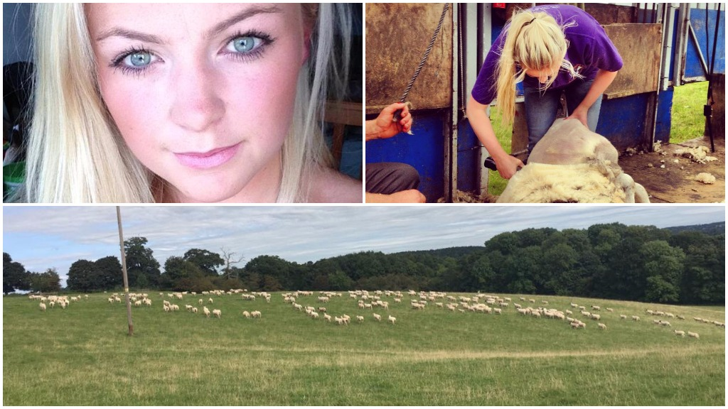 Young farmer makes emotional plea after around 200 ewes and lambs stolen from farm - £5,000 reward offered