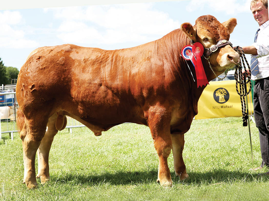 Limousin wins beef supreme at Monmouthshire