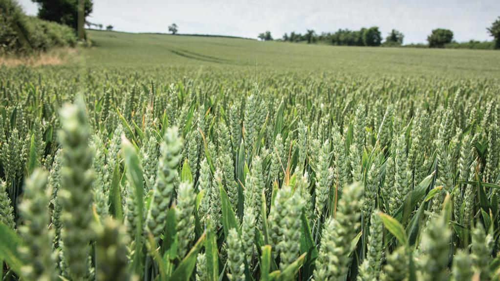 Rothamsted and Bayer form alliance on sustainable crop care