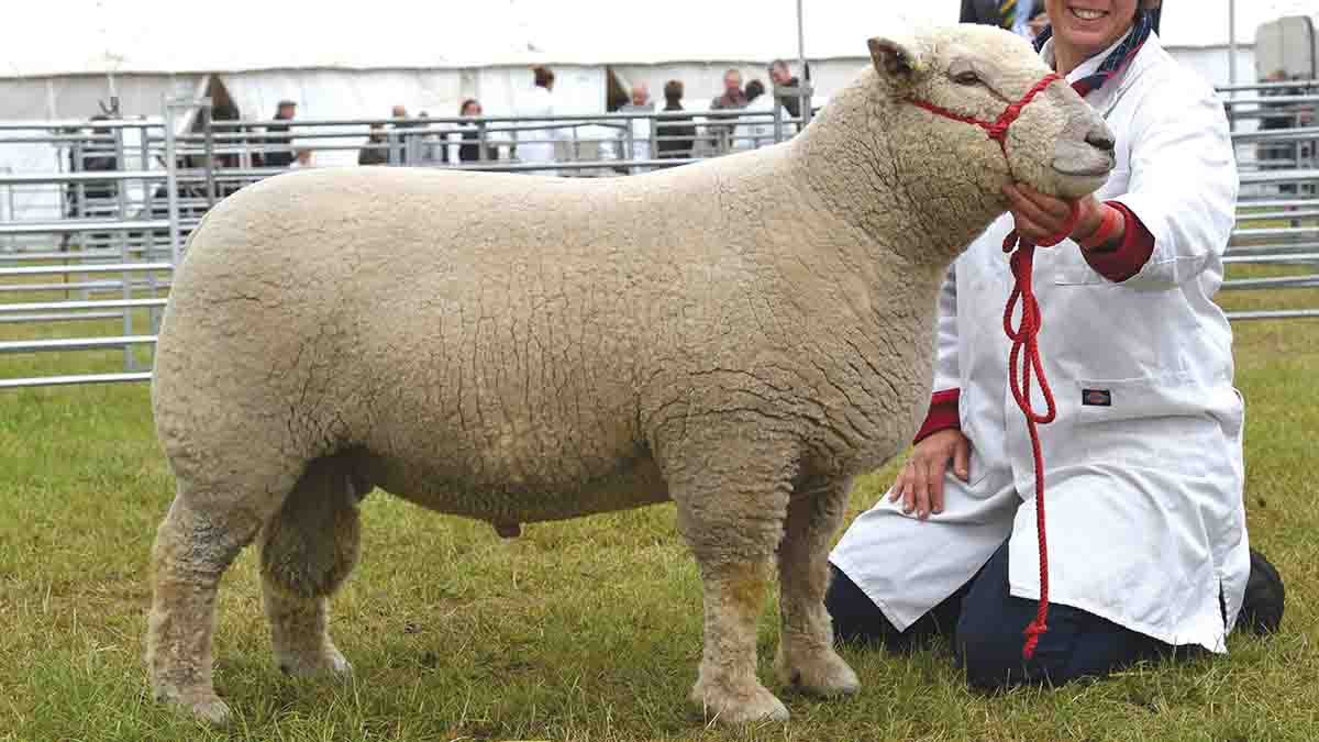 Wakeham-Dawson and Harmer and Basil Cooper's Southdown