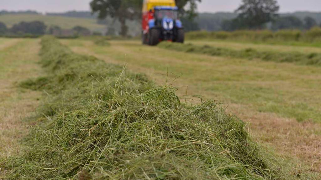 Farmer misses court appearance to cut silage before rain