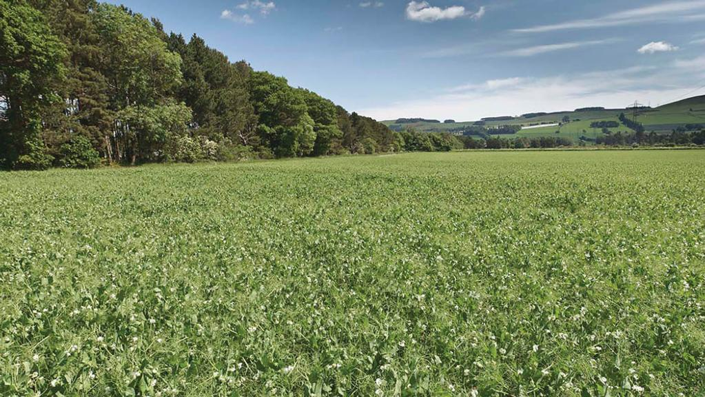 PGRO releases blueprint for UK pulses post-Brexit