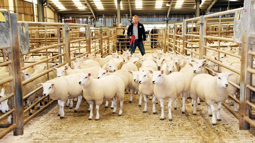 Skipton store lamb opener sees strong average