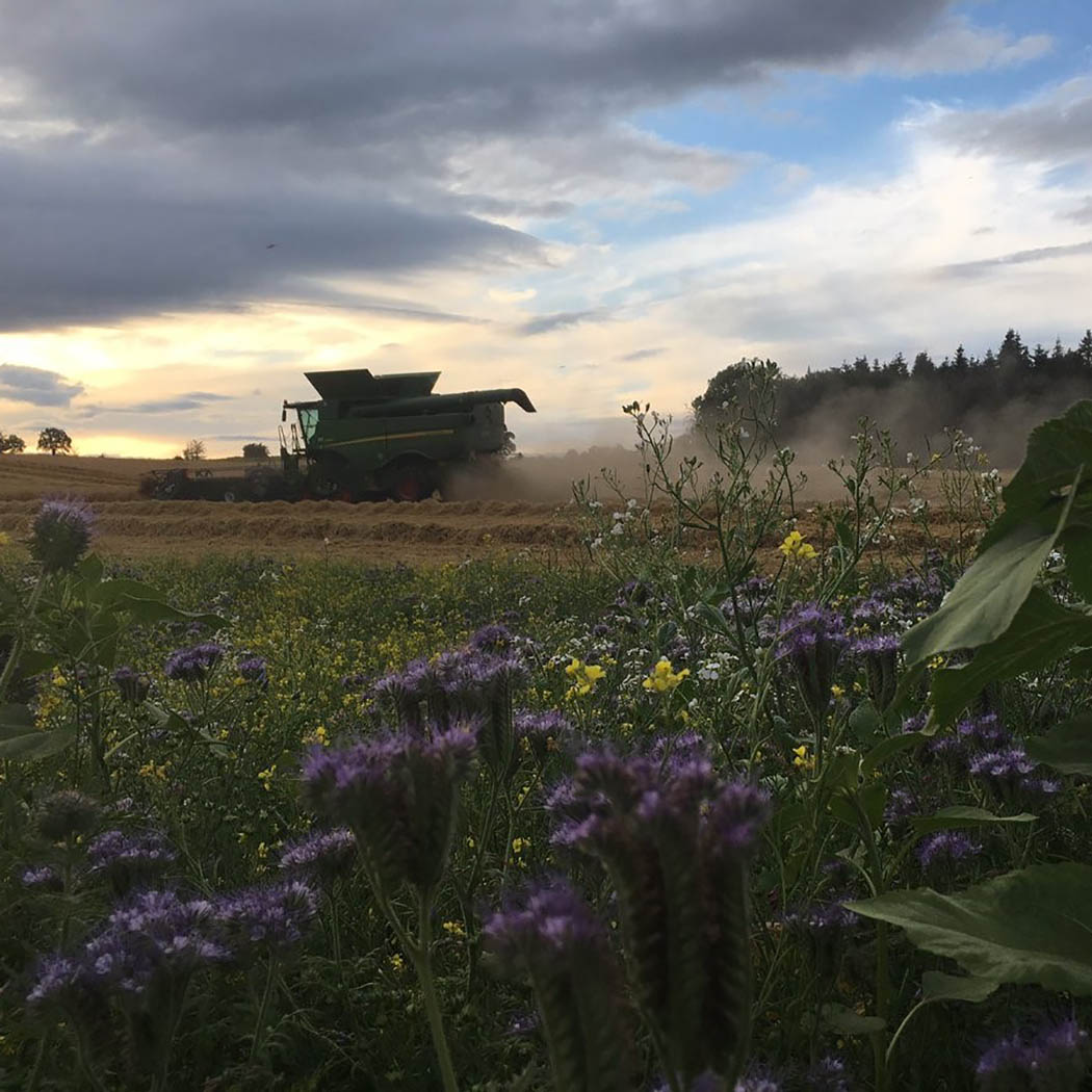 A scenic harvest at Overbury Farms in Gloucestershire by Jake Freestone