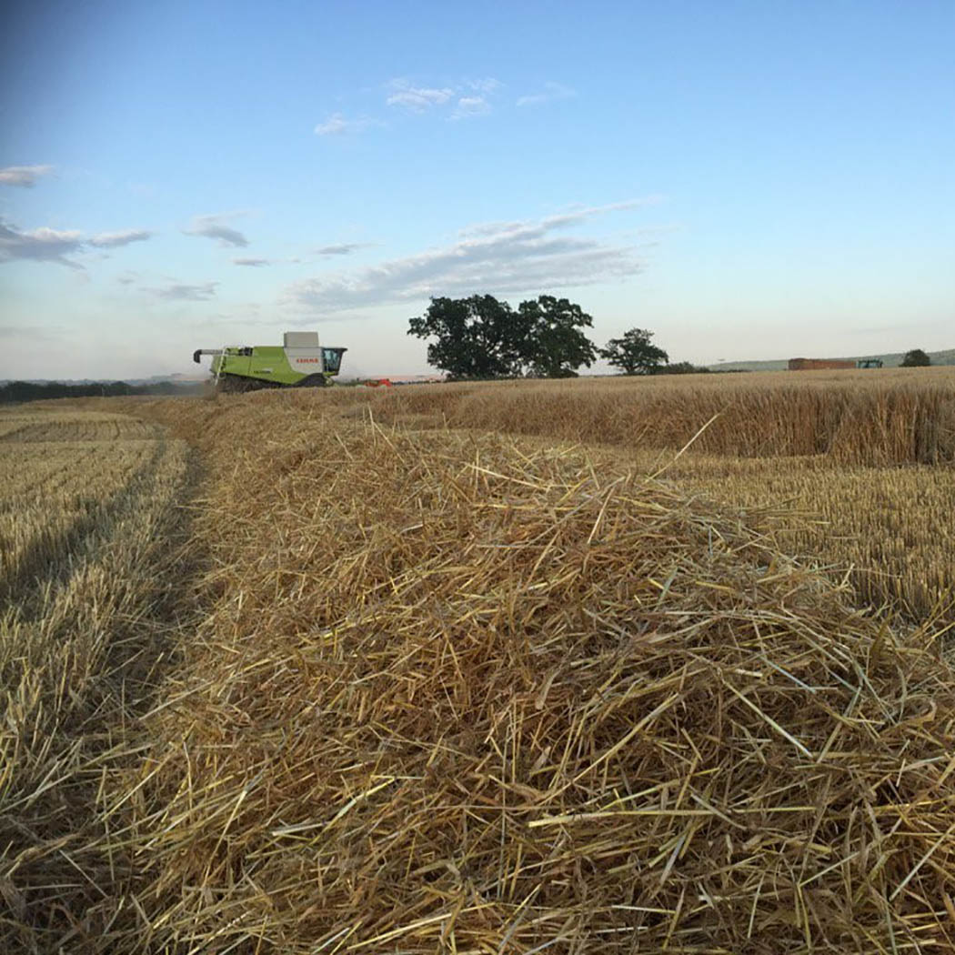 Barley harvest in Wiltshire