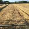 Tower winter barley in South Norfolk at 13.8%