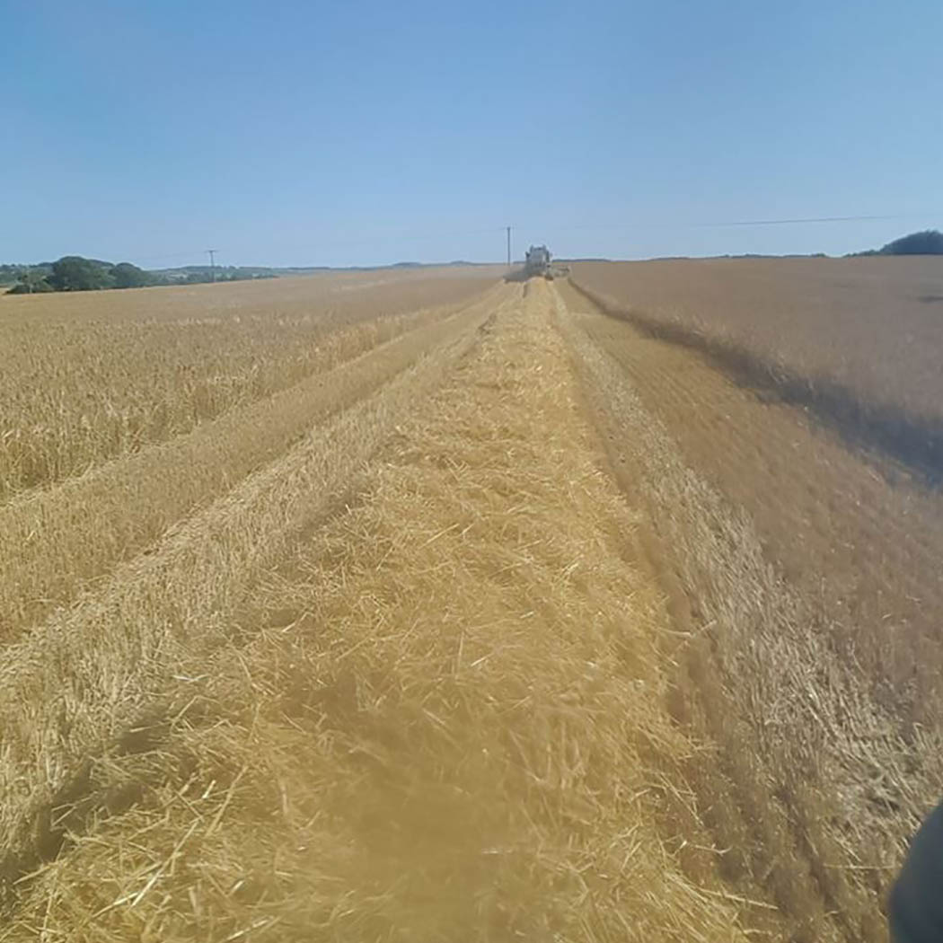2-row winter barley yielding 9.8t/ha (4t/acre) in Northumberland
