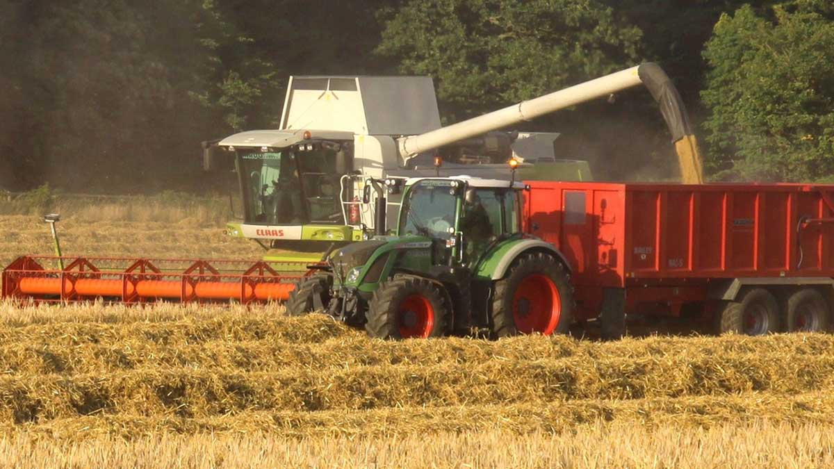 David Maughan cutting barley at Whichester, Northumberland