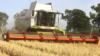 David Maughan cutting barley
