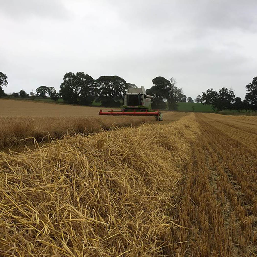 Barley harvest in Northumberland well underway