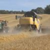 Winter barley harvest in North East England