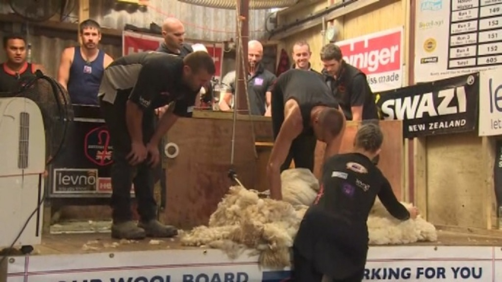 IN PICTURES: Sheep shearing world record smashed on UK farm