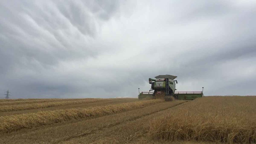 Winter barley progress despite lack of sun in the Scottish borders