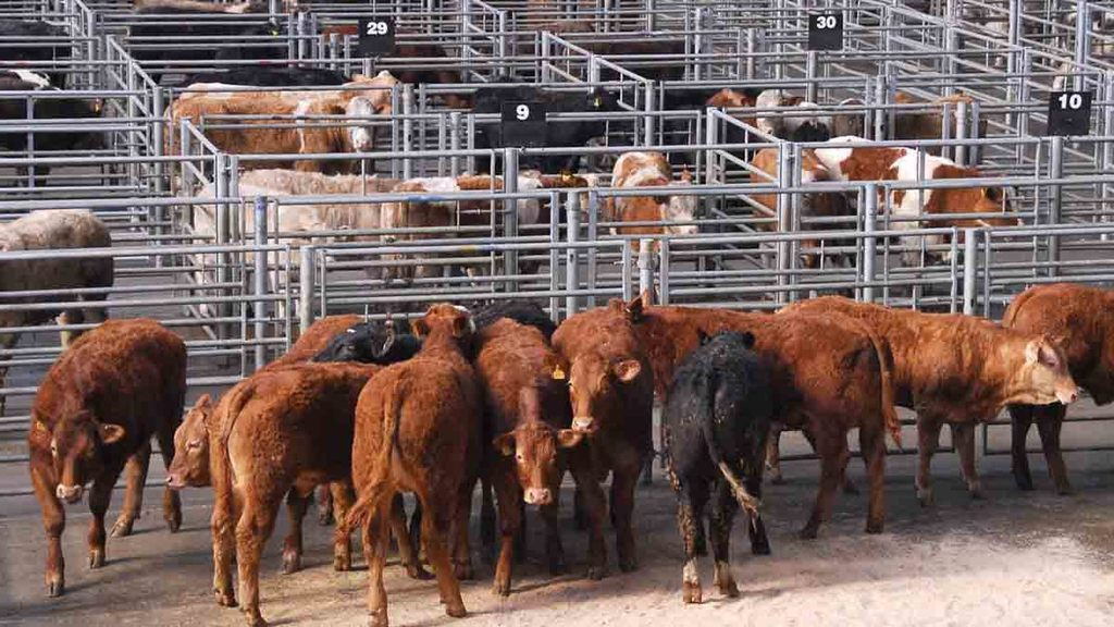 Beef prices down as demand falls short