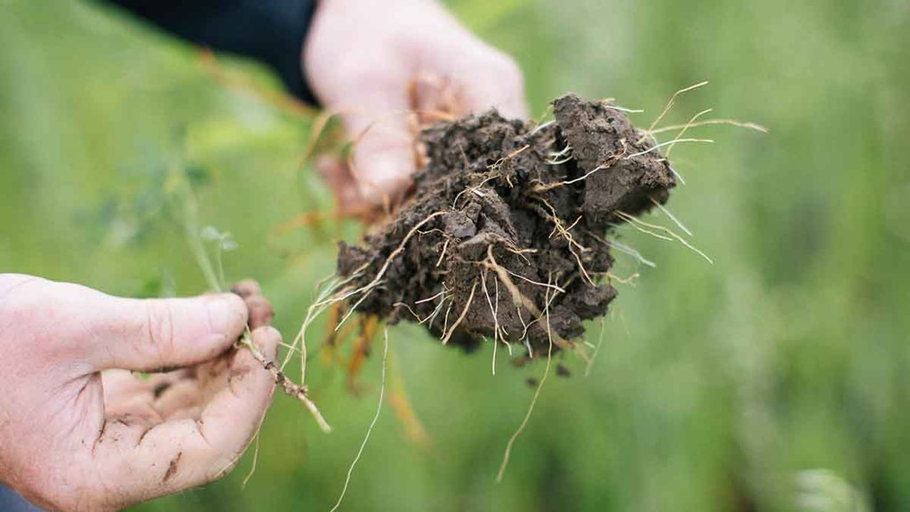 Roots and steel working together for better soil structure