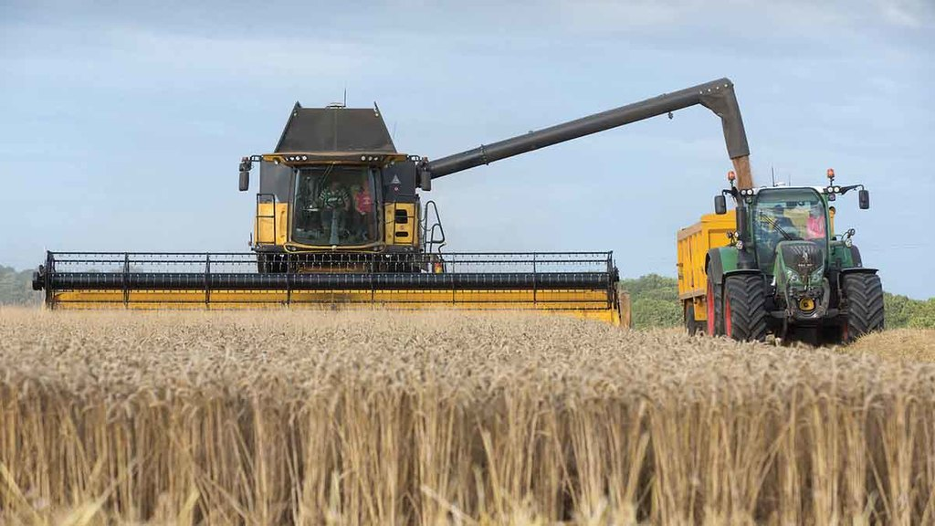 Global pressure drives UK wheat prices down following increased expectations
