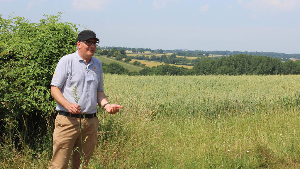 Andrew Trump explains what makes a good quality oat