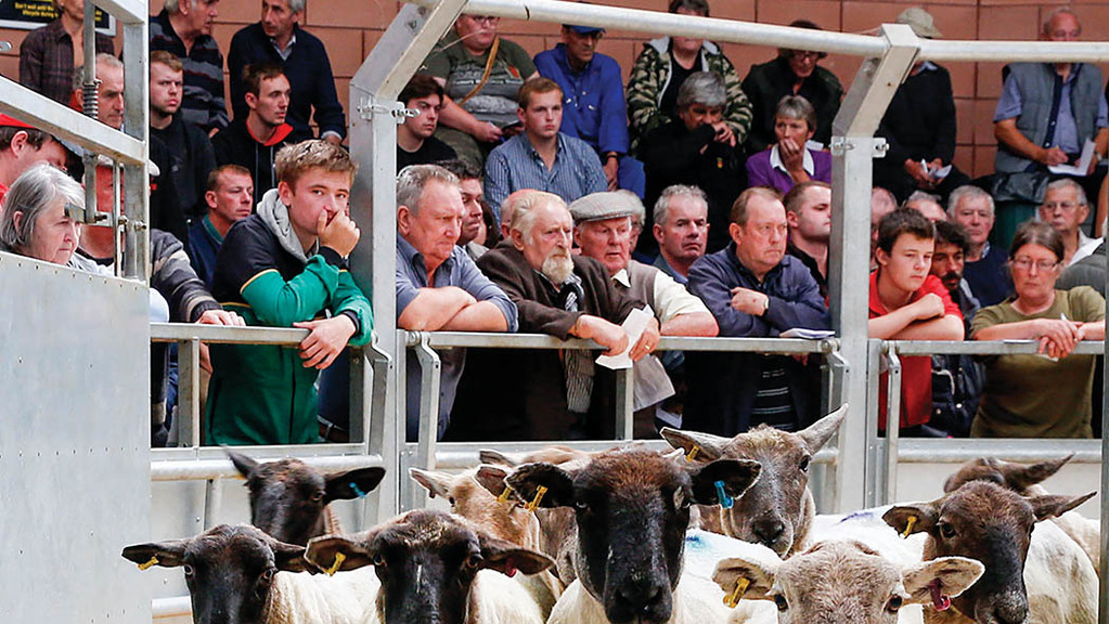 State of British Agriculture: Farmers' Brexit uncertainty soars to new heights