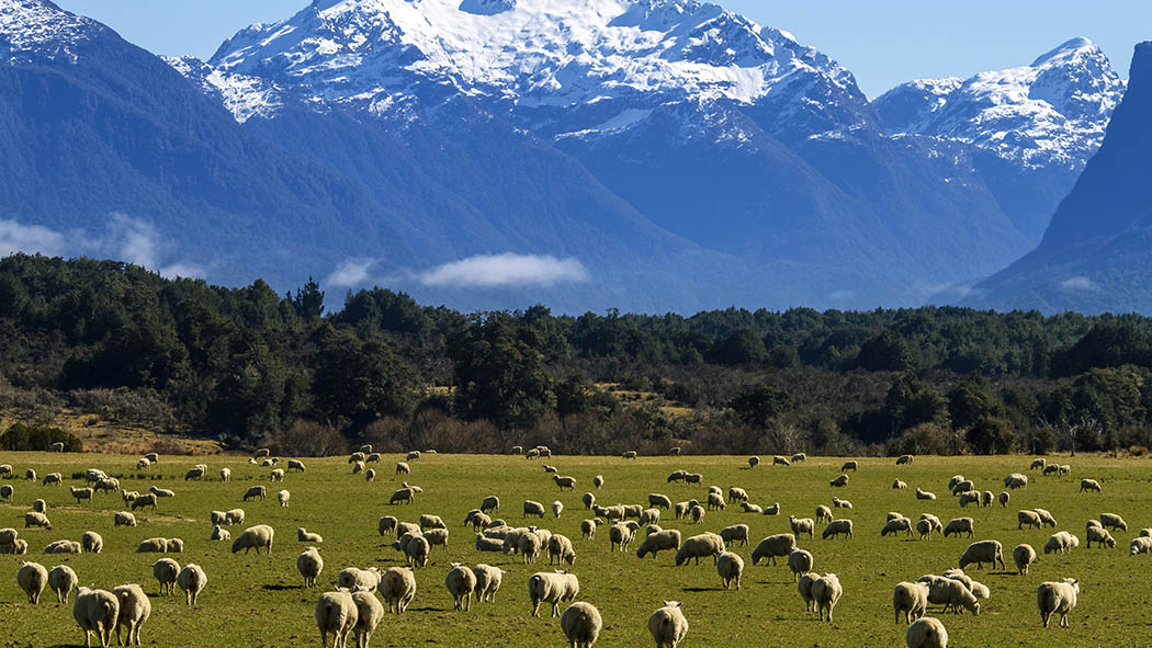Young shearers given opportunity to travel to New Zealand