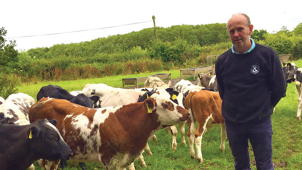 Applying dairy knowledge to the beef sector and how it paid off