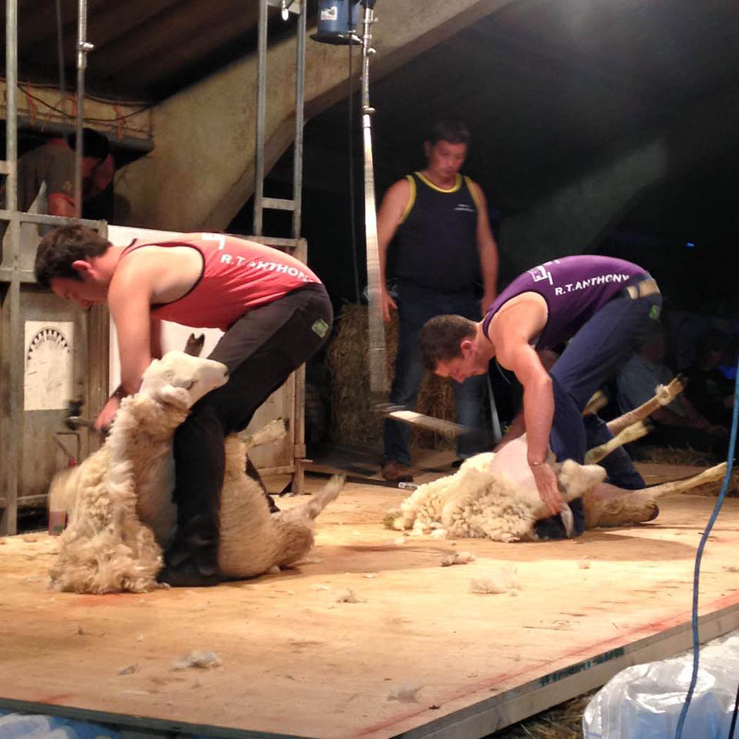 Shearing in practice