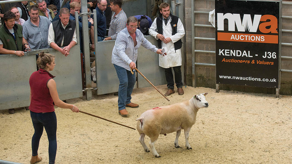 The top priced ram goes through the ring at J36.