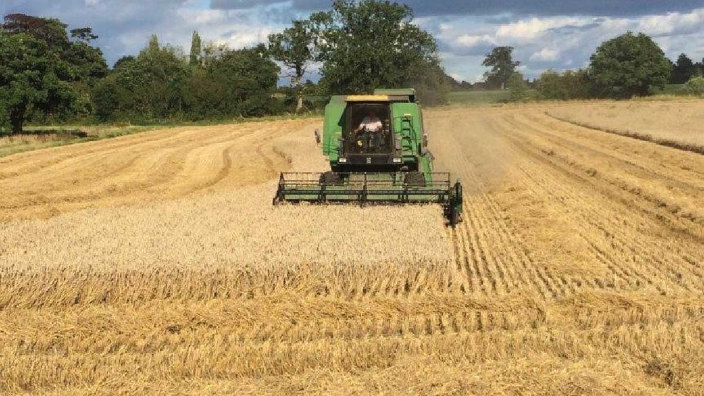Harvest 2019 update: Wheat yields and quality looking promising