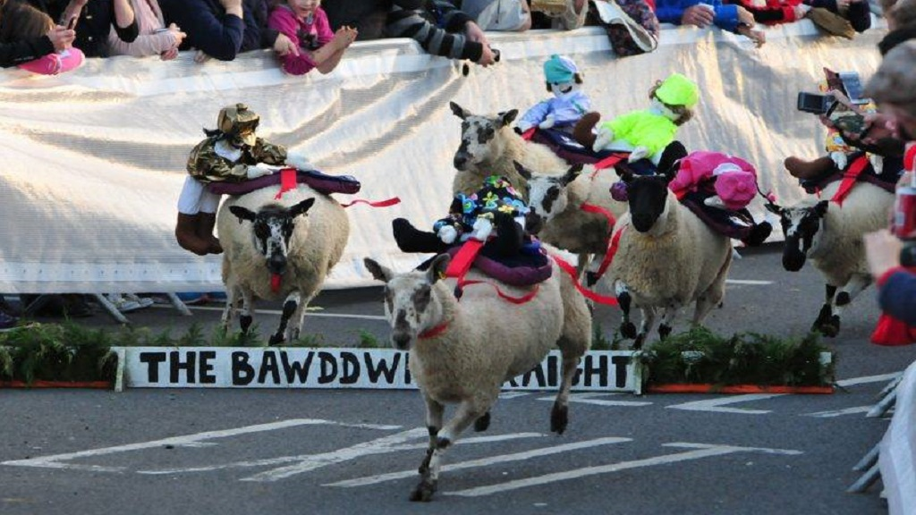 Live sheep race cancelled as animal rights activists set up petition