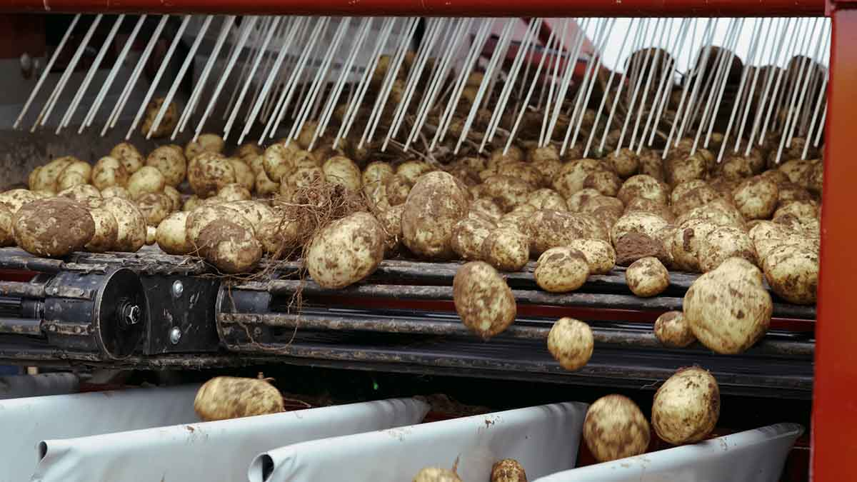 Potato growers urged to ramp up safety measures as HSE inspections launched