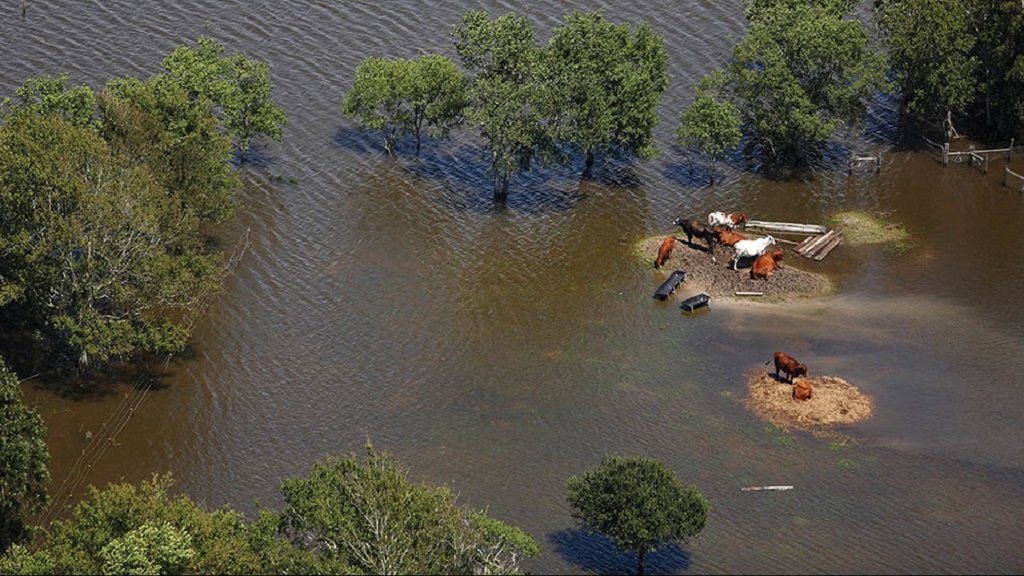Texas farmers and ranchers left counting the cost of hurricane Harvey