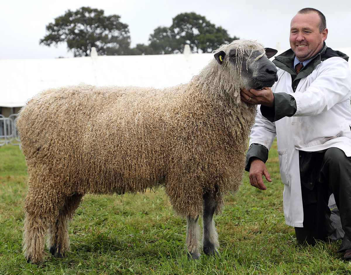 Wensleydale leads sheep ring at Dorset