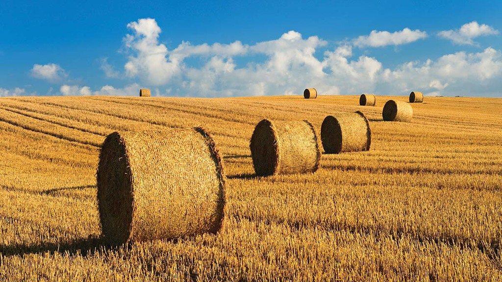 Straw shortage concerns build for farmers after terrible summer