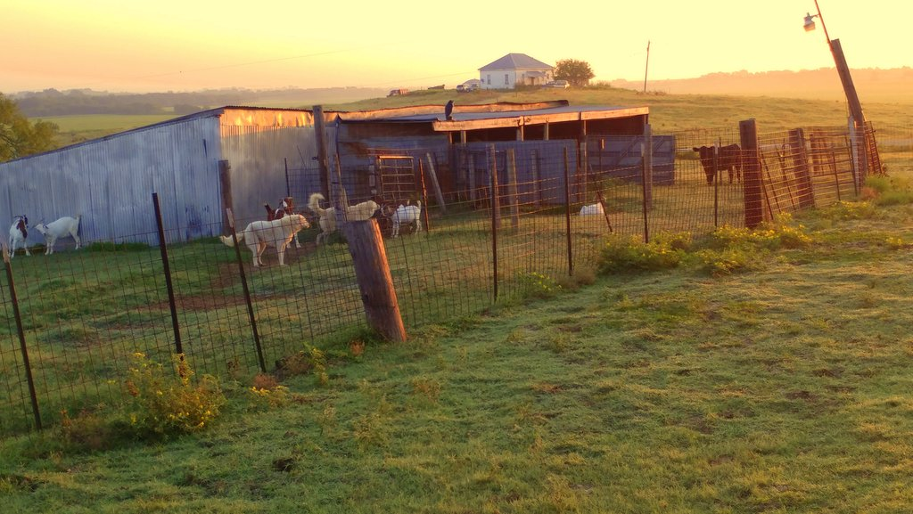 Ag in my Land: Life on a Texas goat farm