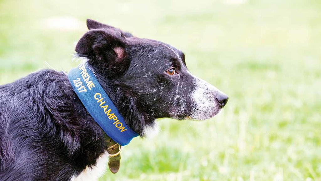 Sheepdog trialler pays tribute to 'top class farm dog'