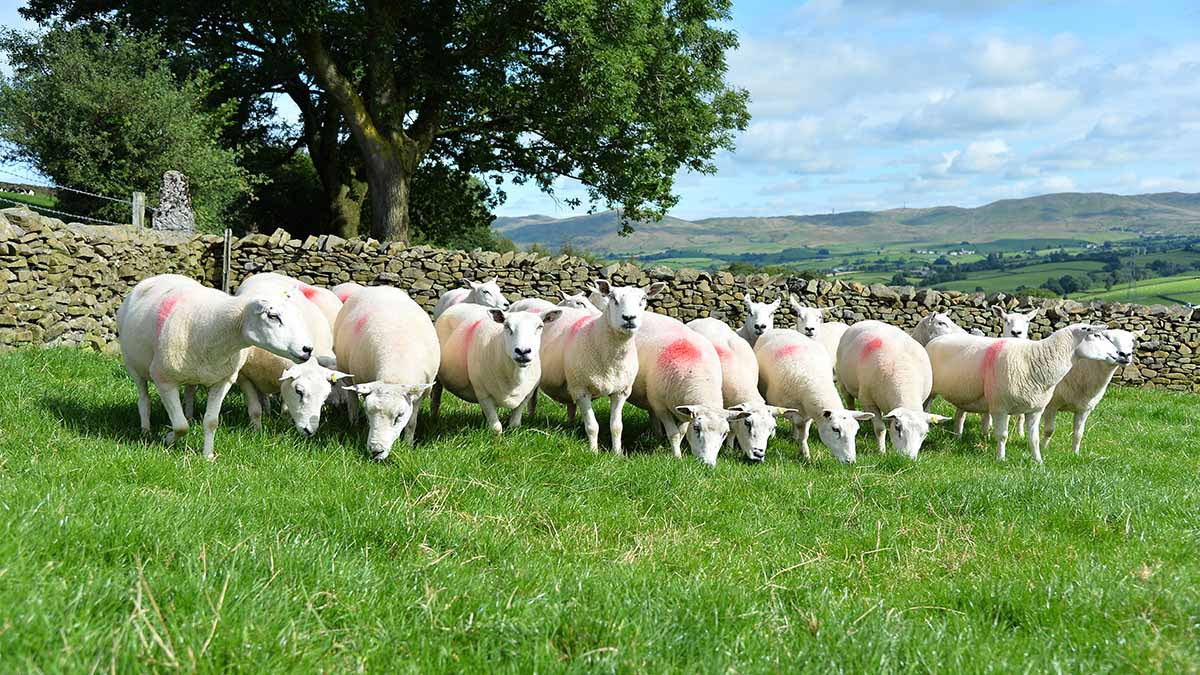 EU considers 'punishing' British farmers in trade deal if UK drops regulatory standards