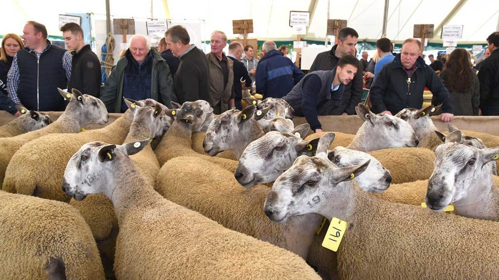 Kelso ram sale becomes latest Covid-19 casualty