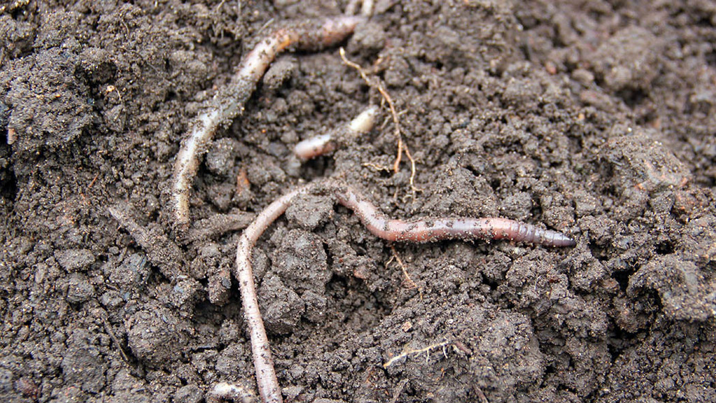 Know your worms in 30 minutes