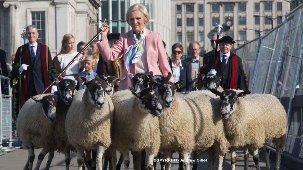 'A lot of people have never seen one' - Mary Berry drives sheep over London Bridge