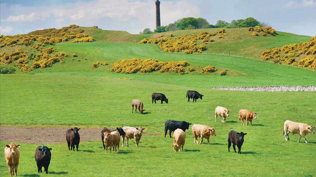 Grass-fed livestock farming not better for the planet, says study
