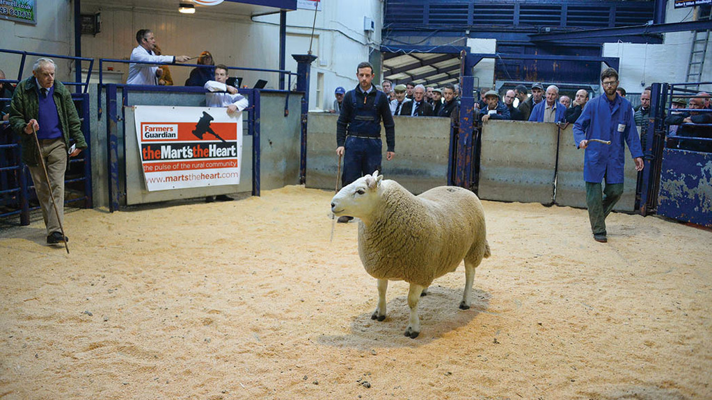 T. Elliot, Jedburgh, took £8,000 for a two-shear ram.