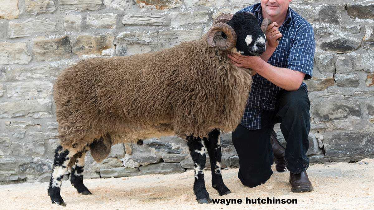 Dalesbred ram smashes breed records (Bentham, Richard Turner and Son)
