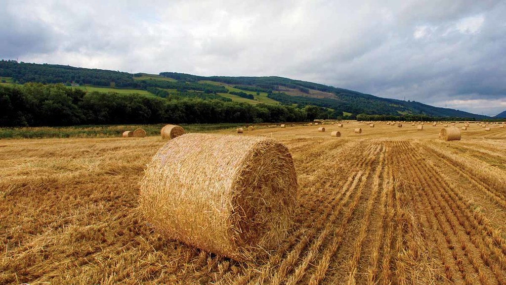 Strong domestic demand for UK wheat