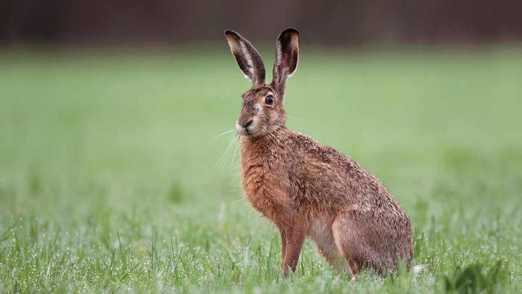 Suffolk police arrest four hare coursers after chase across two counties