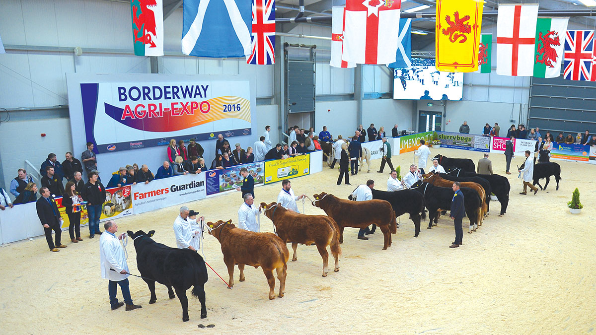 Agri-Expo 2017 - UK's best commercial livestock on show